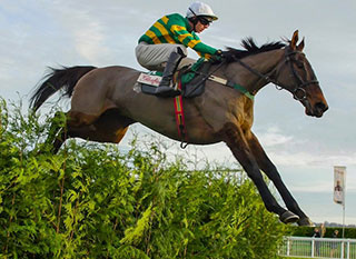 Horse caught jumping over the fence at Cheltenham